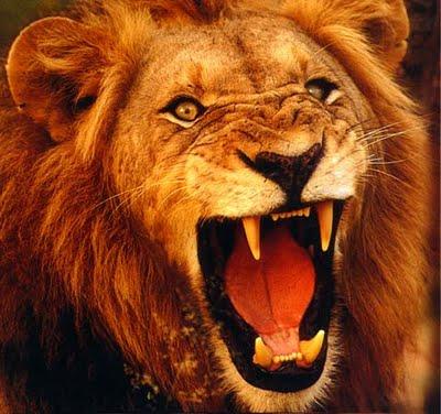 Matar um leão por dia – Espiritualidade para o século 21 6c09318a787ae