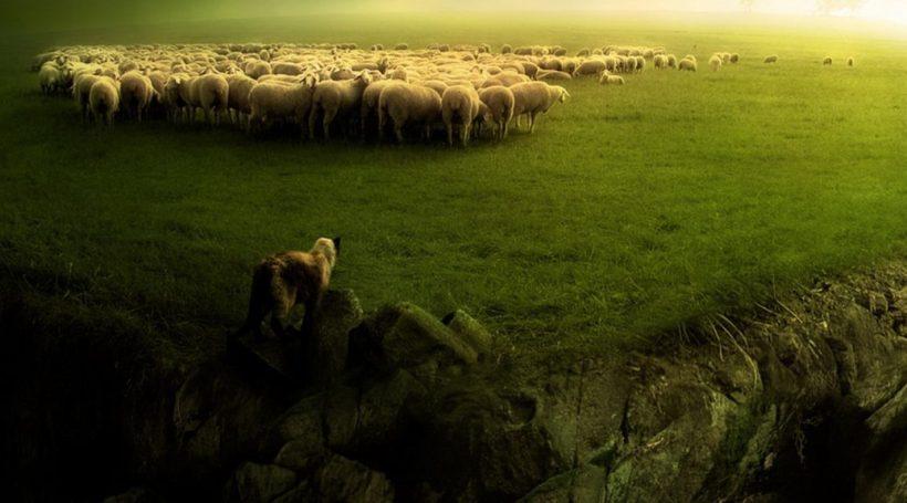 ovelha-1038x576